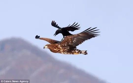 imgur birds funny - 4609797