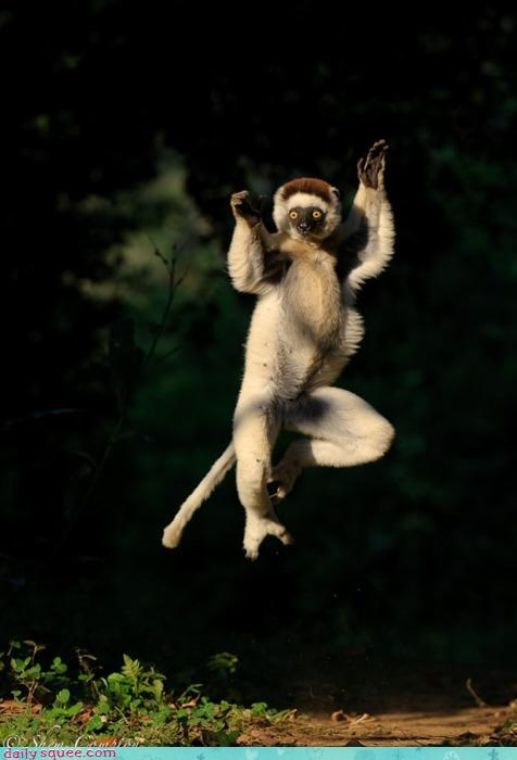 acting like animals karate kick kicking neologism ninja pun robin hood self-centered sifaka