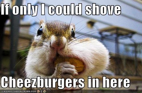 Cheezburger Image 4610349824