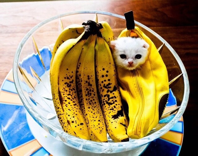 a list of animals using bananas as measuring scales
