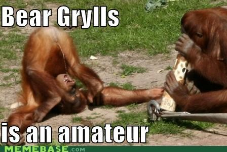bear grylls orangutan pee drinking primate professional - 4611885824