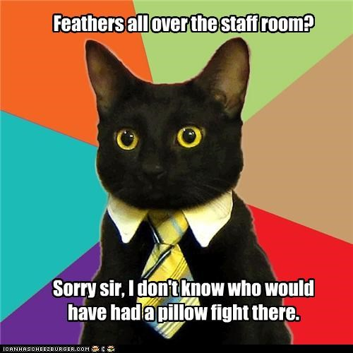 bird eating Business Cat feathers pillow fight staff room whos-to-say