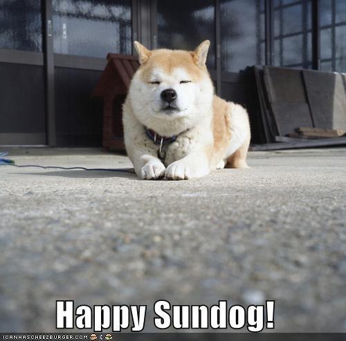 happy,happy sundog,shiba inu,smiling,Sundog