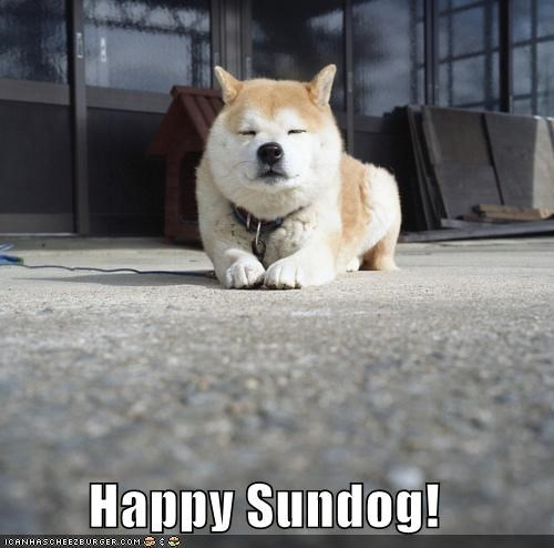 happy happy sundog shiba inu smiling Sundog - 4612007936