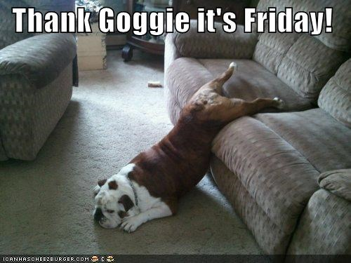 apathetic bulldog couch dont-care floor lazy lying thank-goggie-its-friday - 4612080384