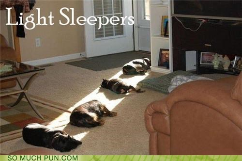 asleep dogs double meaning light literalism sleeper sleepers sleeping - 4612301312