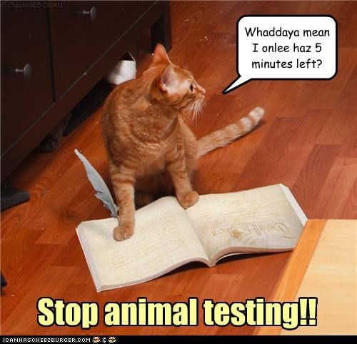 Stop animal testing!! Whaddaya mean I onlee haz 5 minutes left? Chech1965 010411