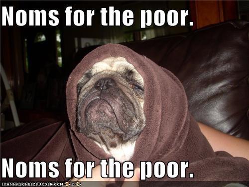 asking beg begging best of the week Hall of Fame hood i has a hotdog noms poor pug question towel - 4612451840