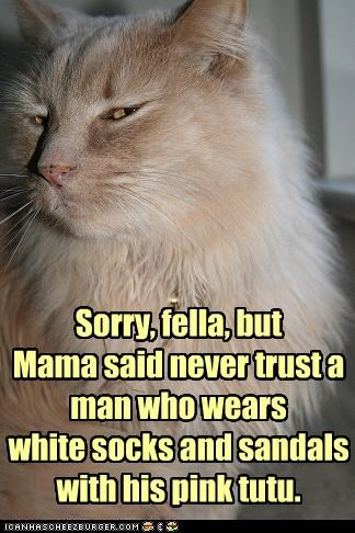 advice,caption,captioned,cat,mother,never,pink,sandals,socks,sorry,trust,tutu