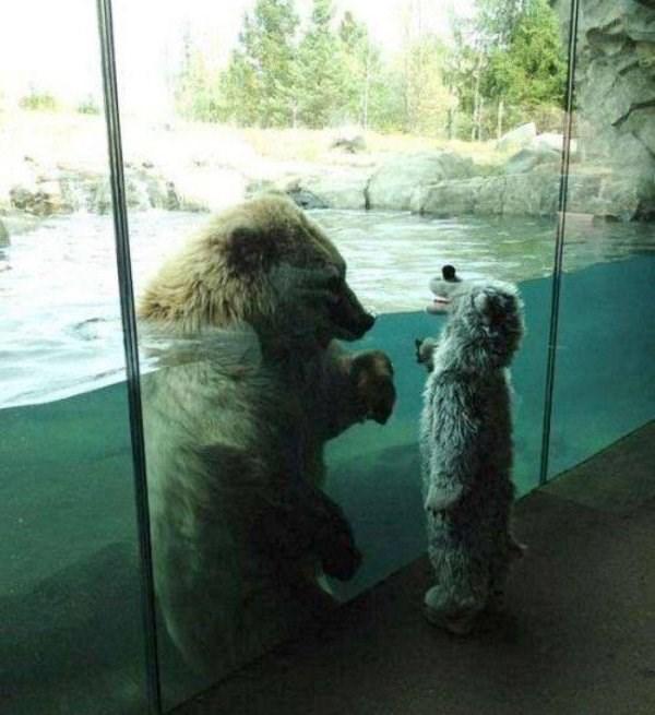 photos animal weird - 4612613