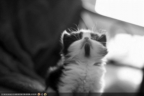 black and white chin cyoot kitteh of teh day Fluffy scratch - 4612746496