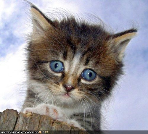 blue,blue eyes,cyoot kitteh of teh day,eyes,kitten,Sad