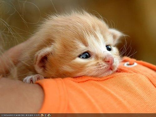 cyoot kitteh of teh day,hug,orange,tiny