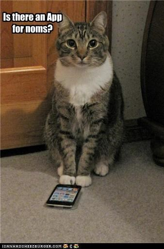 App,apple,caption,captioned,cat,iphone,ipod,noms,question,wondering