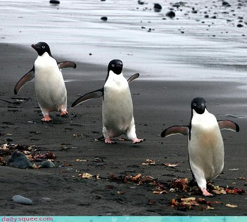 acting like animals dancing denial march march of the penguins penguin penguins strutting