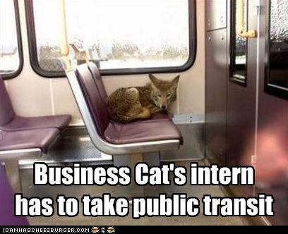 Business Cat's intern has to take public transit