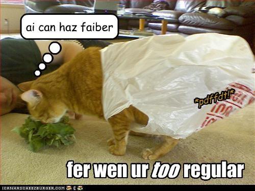 fer wen ur regular too ai can haz faiber *pdffdt!*