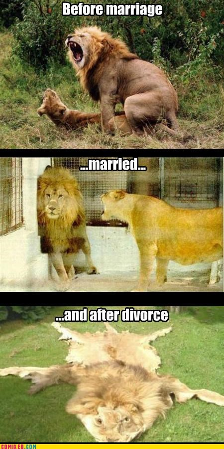 divorce,lion,marriage,skinned