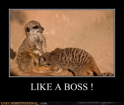 animals Like a Boss oral sexy times
