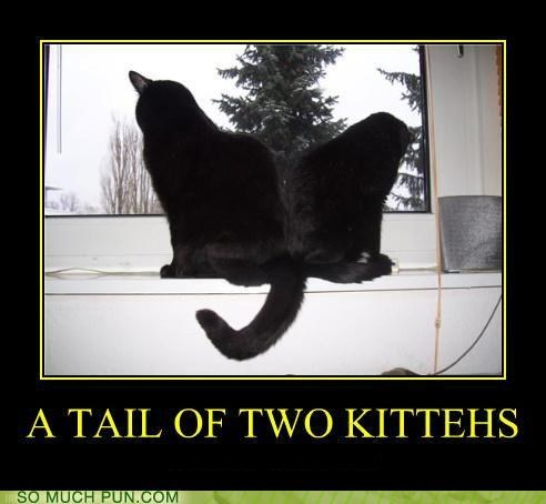 a tale of two cities,cat,Cats,charles dickens,classic,homophone,illusion,literalism,novel,parody,tail,tale,title