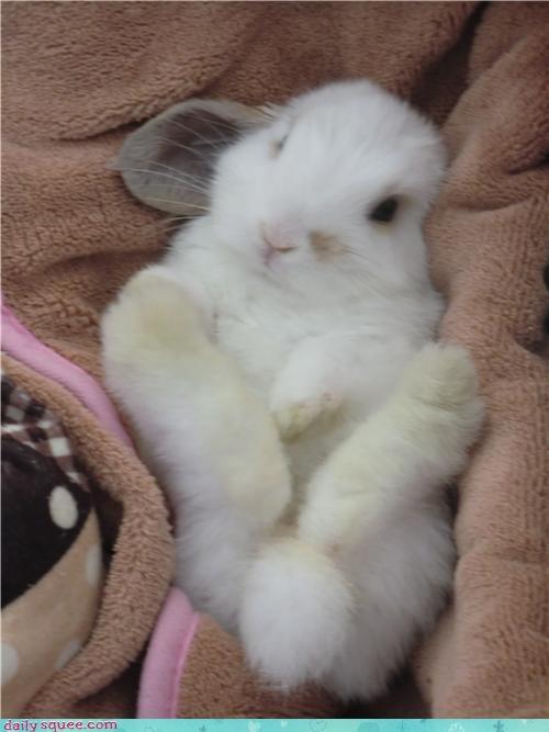 Bunday bunny do want holland lop namesake noms rabbit reader squees waffle - 4614161920