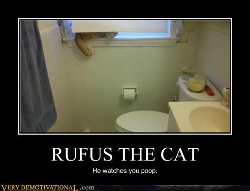 bathroom,cat,poop,rufus
