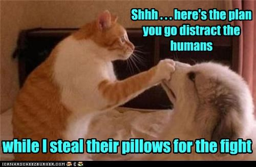while I steal their pillows for the fight Shhh . . . here's the plan you go distract the humans