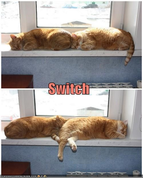 caption captioned cat Cats mirrored siblings sleeping switch switching tabbies tabby - 4615262976