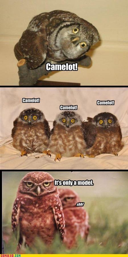 camelot model monty python Owl - 4616025344