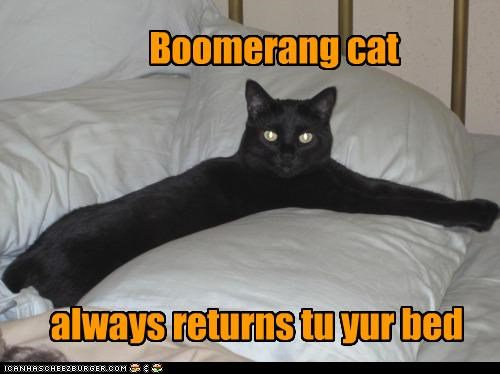 always bed boomerang caption captioned cat returns sleeping - 4617936640