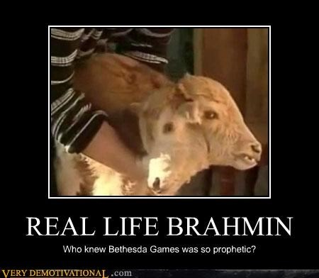 REAL LIFE BRAHMIN Who knew Bethesda Games was so prophetic?