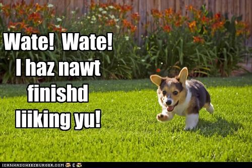 chasing corgi FAIL licking pickup line puppy running wait - 4618763264