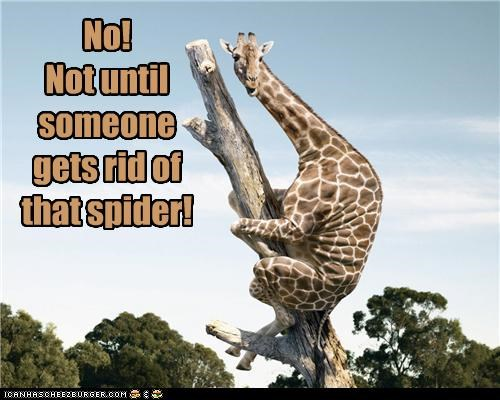 afraid,caption,captioned,climbing,cowering,giraffes,hiding,no,refusing,spider,stuck,tree