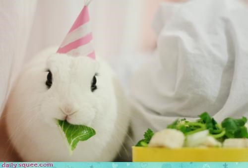 birthday buffet Bunday bunny eating happy happy bunday hat Party rabbit