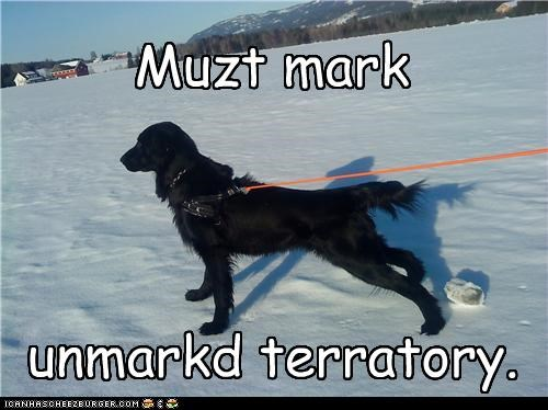cannot,cannot resist,labrador,mark,resist,snow,territory,unmarked