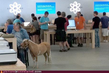 computers,pony,store