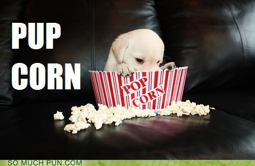 box,container,corn,peeking,pop,Popcorn,pup,puppy,similar sounding