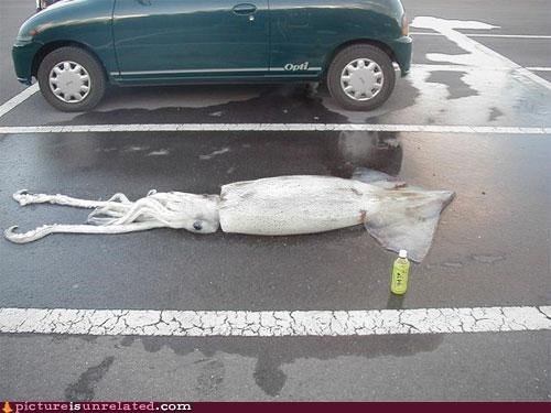 eww,parking lot,squid,wtf