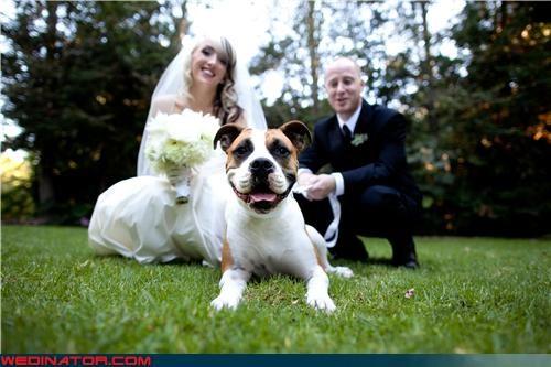 bride dogs funny wedding photos groom - 4620934912
