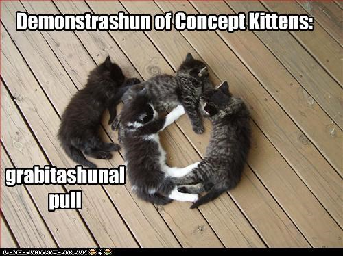captioned cat Cats concept demonstration gravitational pull Gravity kitten pull - 4621099776