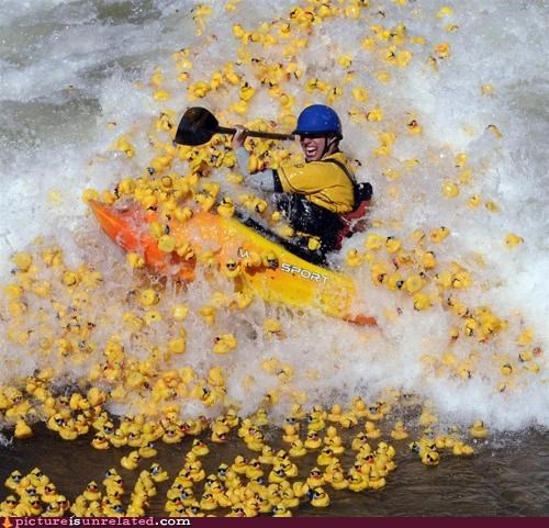 awesome,ducks,fun,kayaking