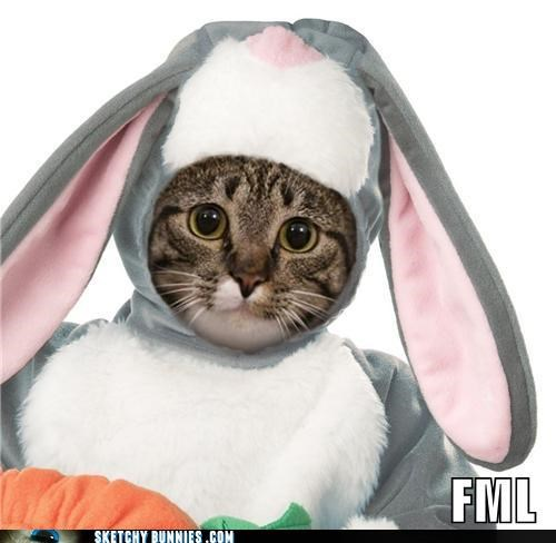 Cats lolcat meme pets - 4621696000