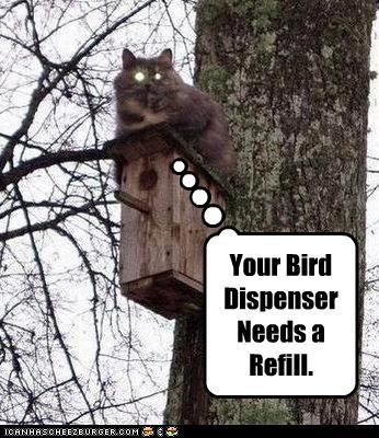 Your Bird Dispenser Needs a Refill.