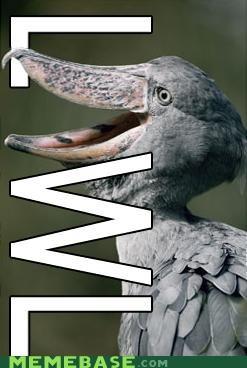 bird lawl Memes what - 4621898496