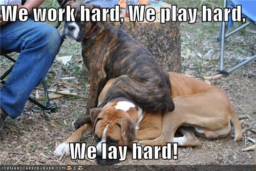 We work hard, We play hard, We lay hard!