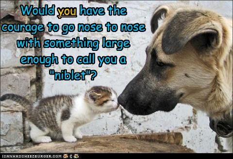 "Would you have the courage to go nose to nose with something large enough to call you a ""niblet""? you"