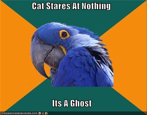 Cats ghosts Paranoid Parrot paranormal activity - 4622984192