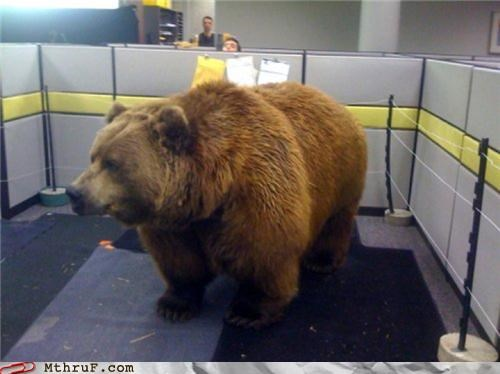bear cubicle meme Office prank scary