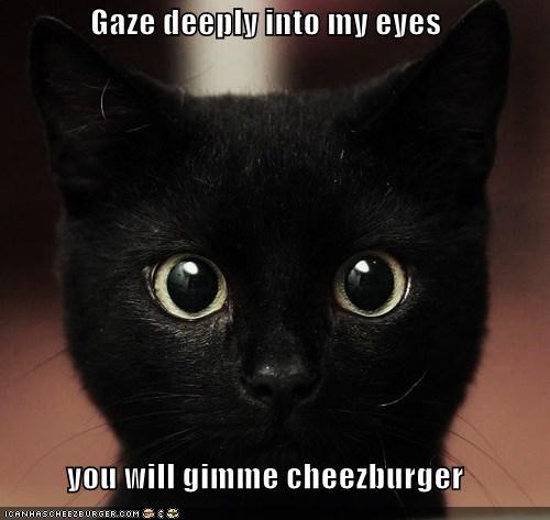 Cheezburger Image 4623939072