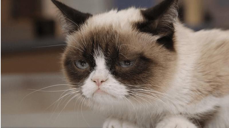 Grumpy Cat Cats funny - 4624389